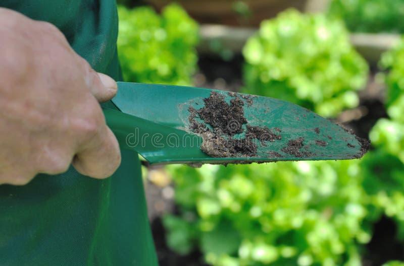 Planterpinne för att arbeta i trädgården royaltyfri fotografi