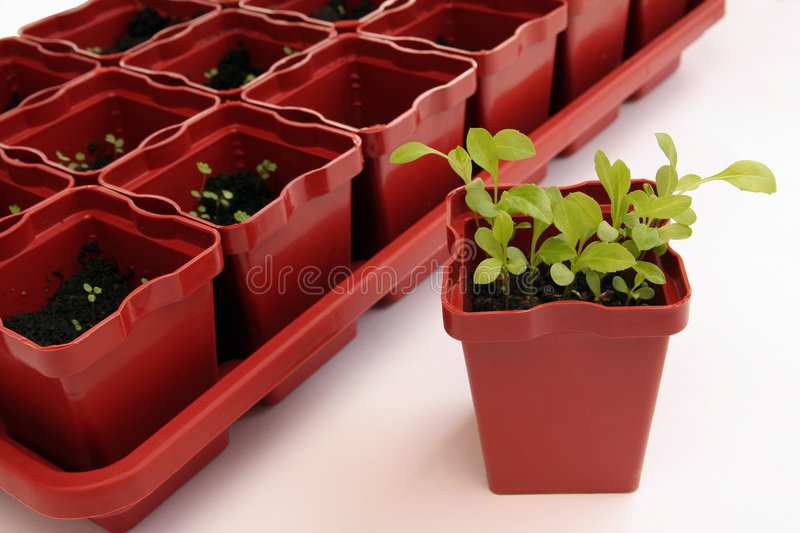 Plantes images stock