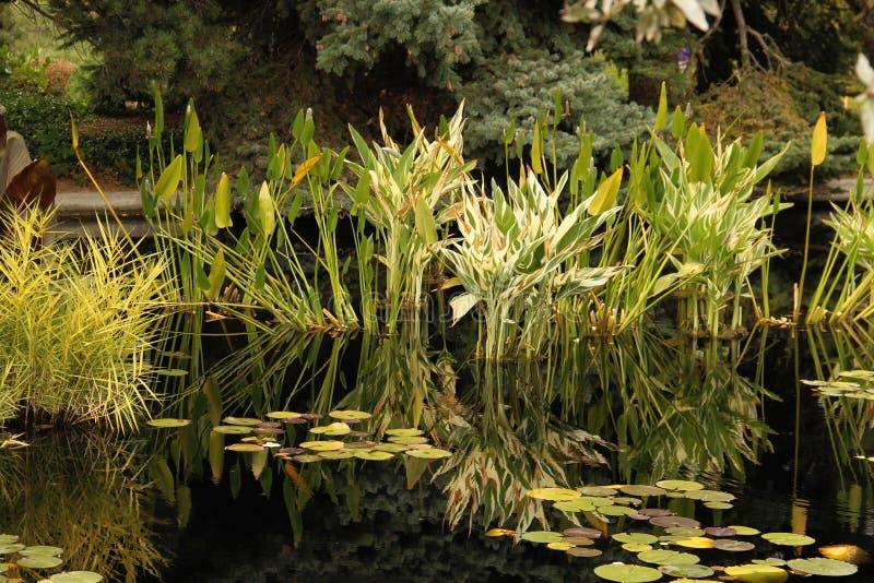 Plantes aquatiques photos stock