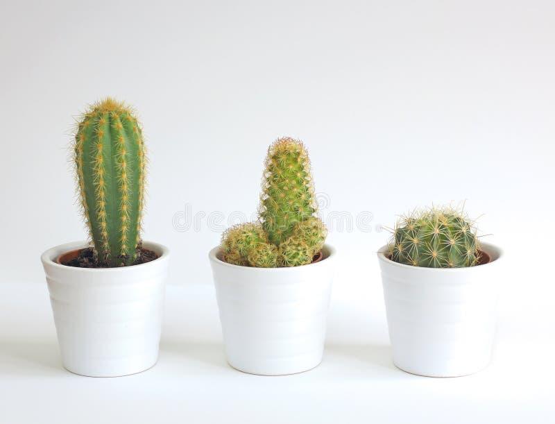 plantes d 39 int rieur de cactus image stock image du trois. Black Bedroom Furniture Sets. Home Design Ideas