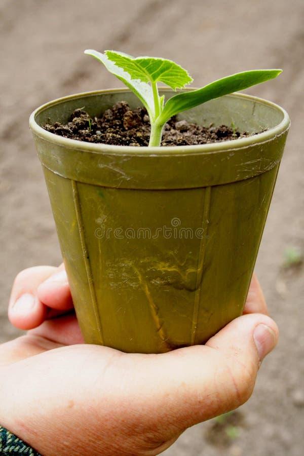 Plantes dans des bacs images stock