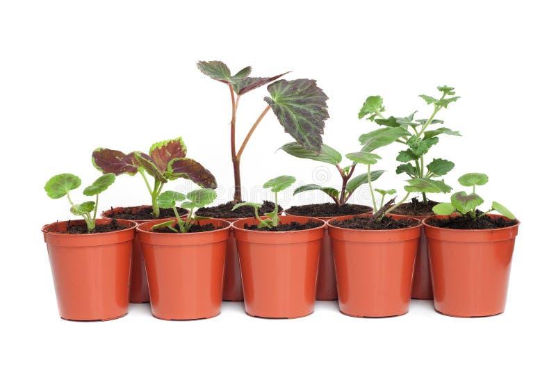 Plantes dans des bacs en plastique image stock