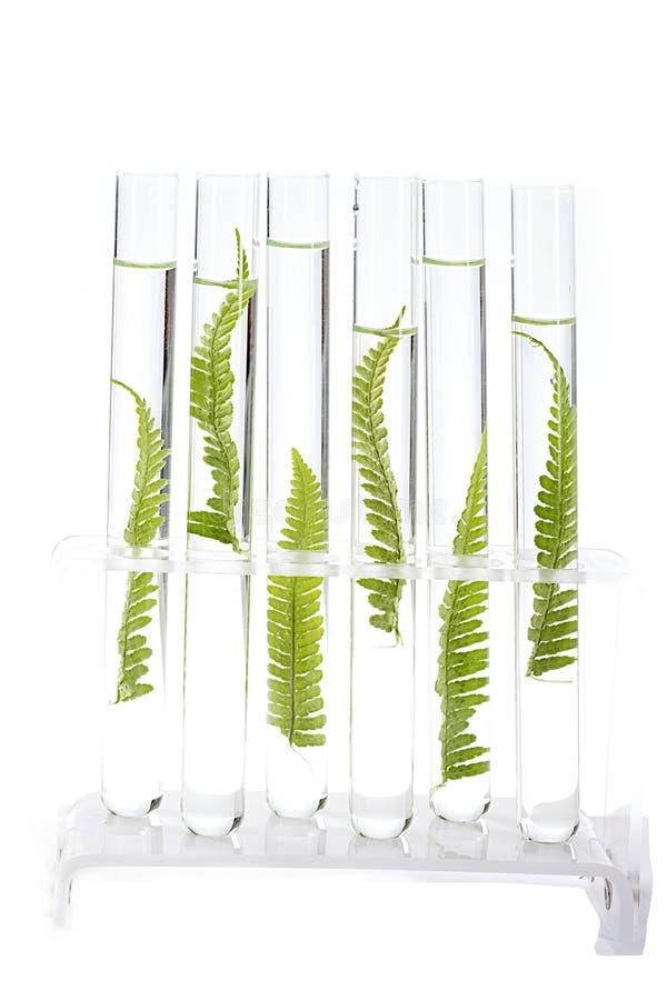Plantes de Clonage photographie stock