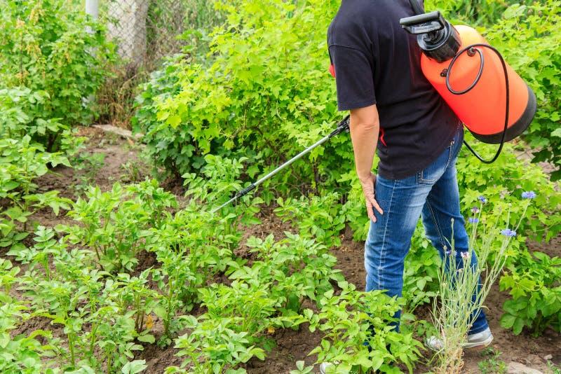 Plantes de pommes de terre protectrices de la maladie fongique ou vermine avec des RP photos stock
