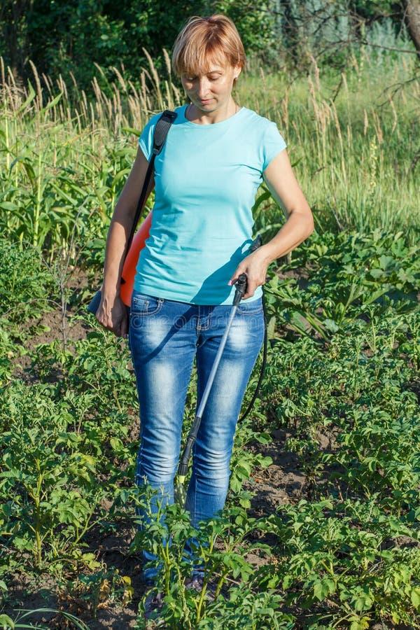 Plantes de pommes de terre protectrices de la maladie fongique ou vermine avec des RP image libre de droits