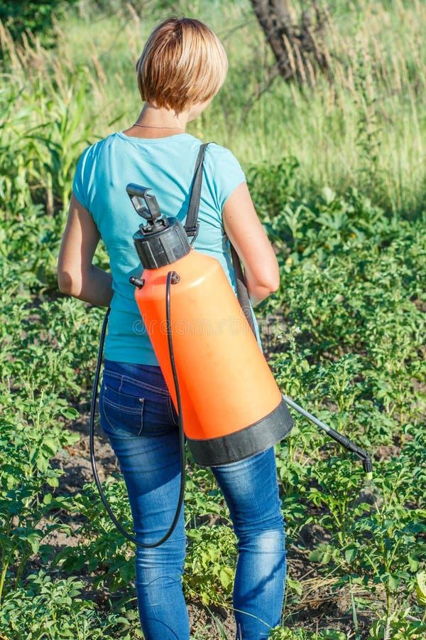 Plantes de pommes de terre protectrices de la maladie fongique ou vermine avec le pulv?risateur de pression photo libre de droits