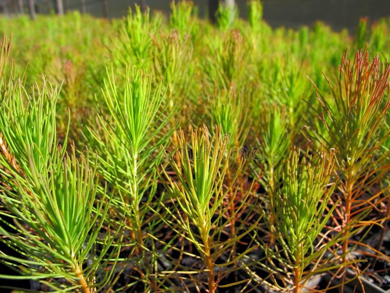Plantes de sylviculture photographie stock libre de droits