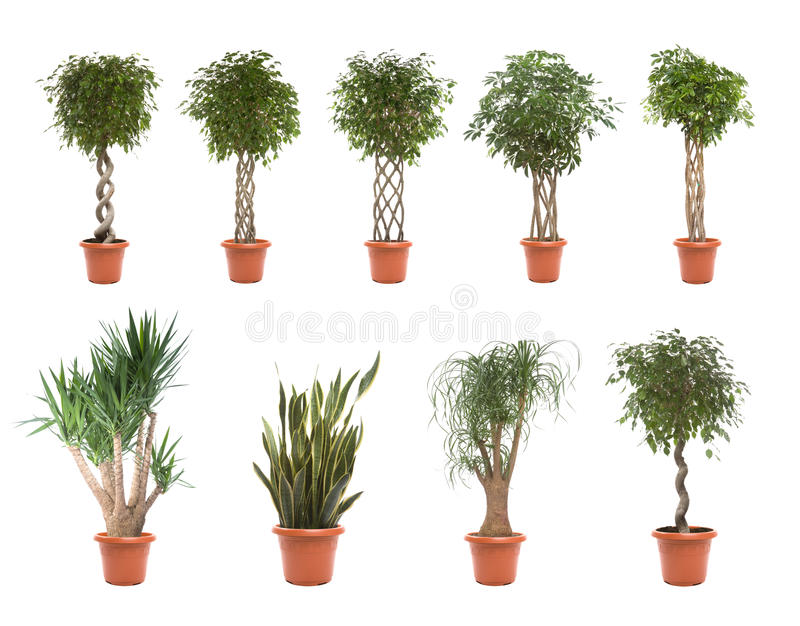 Plantes en pot photo stock
