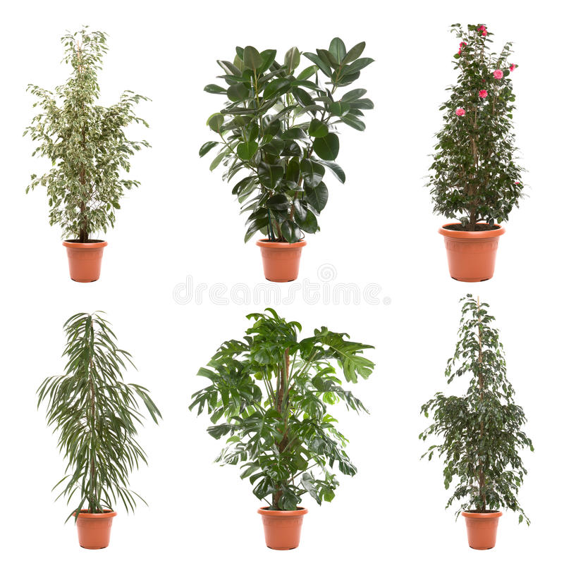 Plantes en pot photographie stock libre de droits