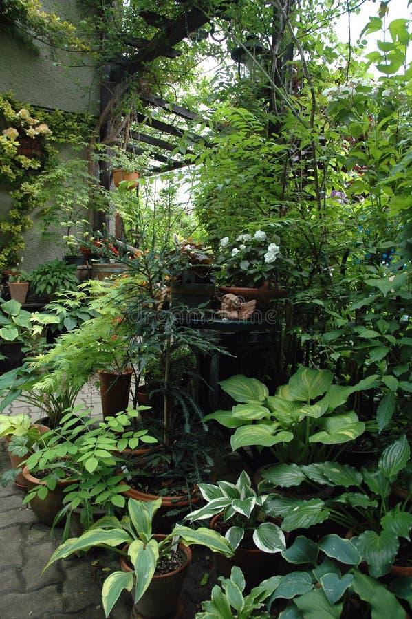 plantes en pot dans la place de jardin d 39 ombre photo stock. Black Bedroom Furniture Sets. Home Design Ideas
