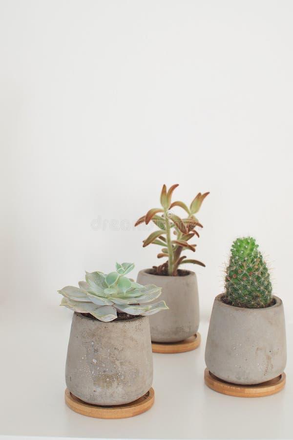 Plantes et cactus succulents dans l'espace blanc de copie de fond de pots de pièce de concept à la mode moderne concret de décora photographie stock libre de droits