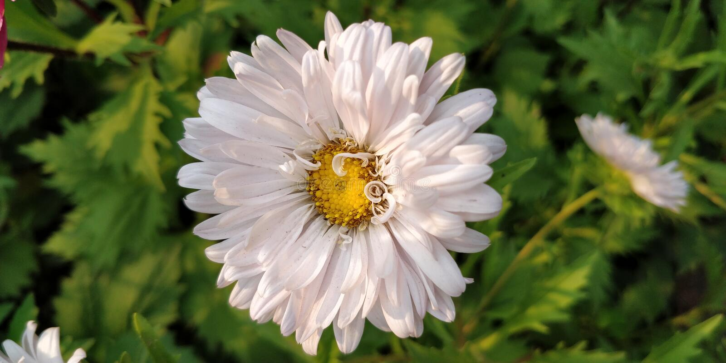Plantes et fleurs photos libres de droits