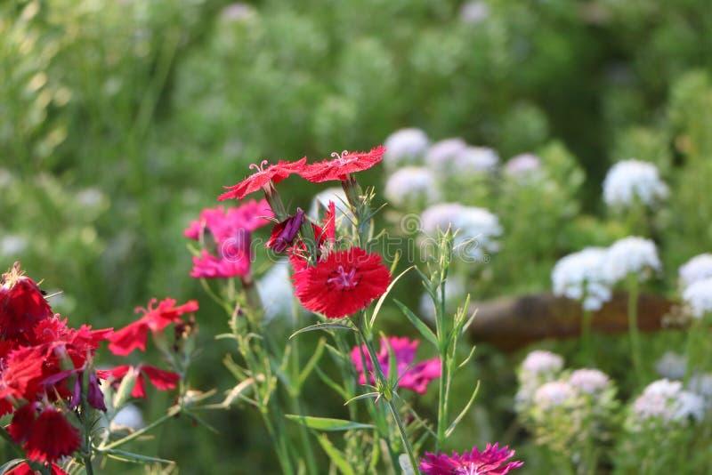 Plantes et fleurs photo stock