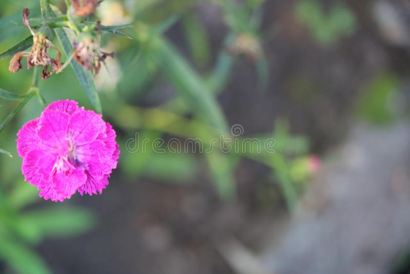 Plantes et fleurs photos stock
