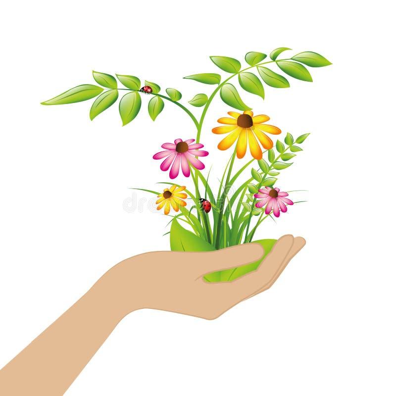 Plantes et fleurs femelles de prise de main illustration de vecteur
