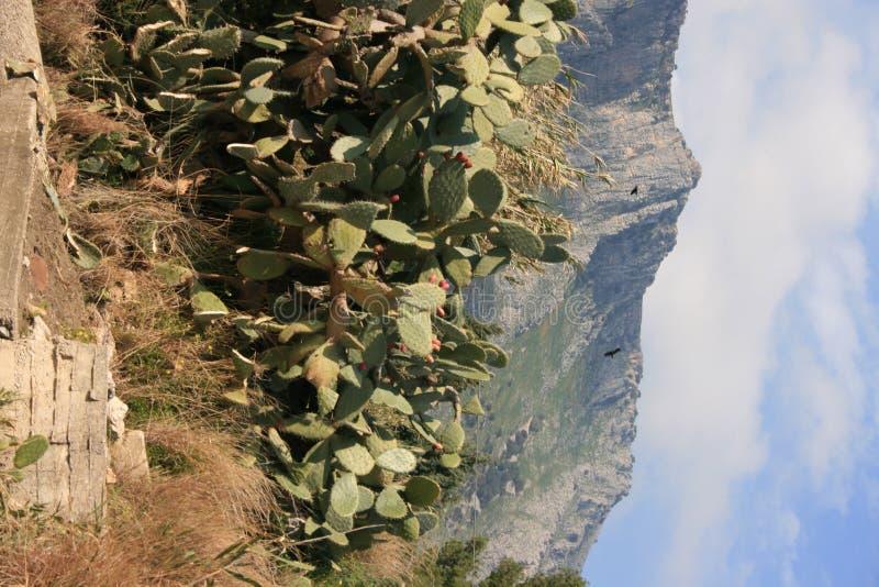 Plantes et fruits de figues de Barbarie image stock