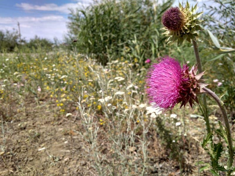 Plantes, fleurs, herbe, nature et été photo libre de droits