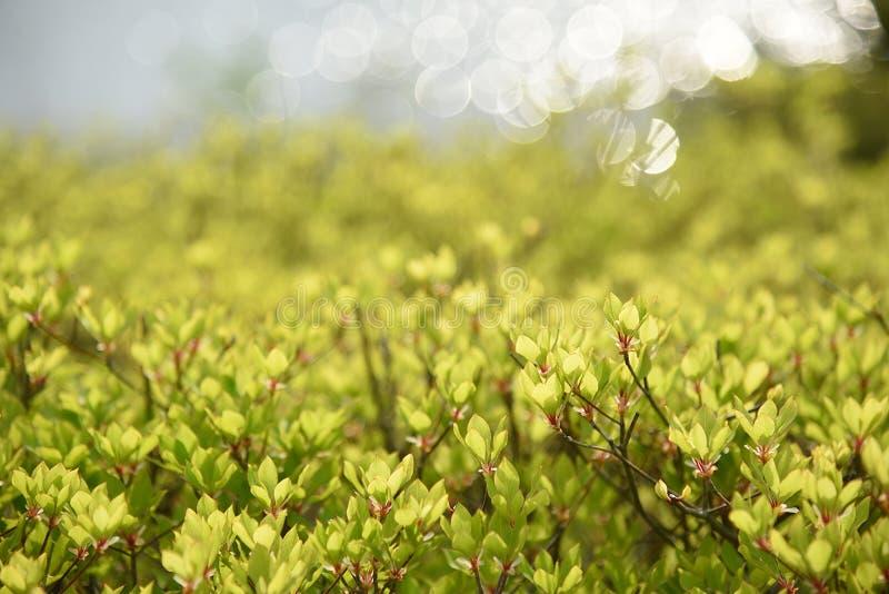 Plantes ornementales avec la lumière du soleil photographie stock libre de droits