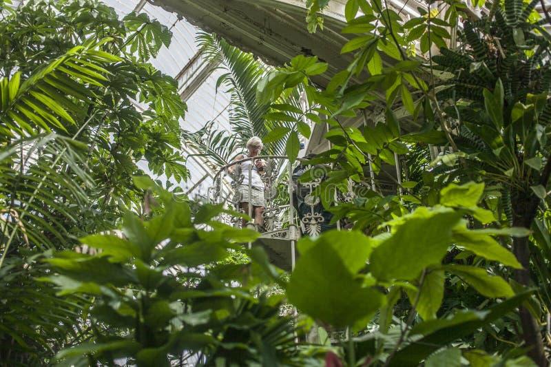 Plantes tropicales aux jardins de Kew photographie stock