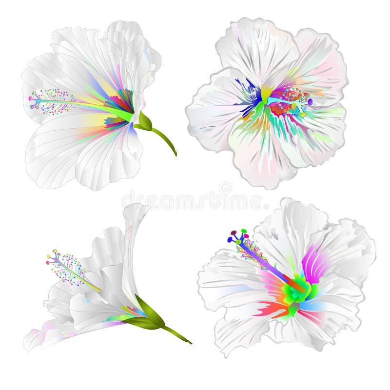 Plantes tropicales colorées multi de fleurs de ketmie sur une illustration blanche de vecteur de cru d'ensemble de fond editable illustration libre de droits