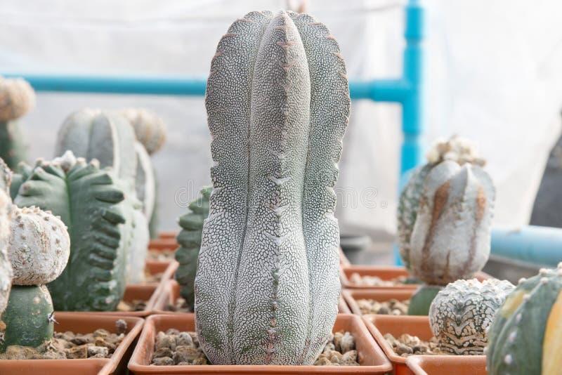 Plantes tropicales de cactus images libres de droits