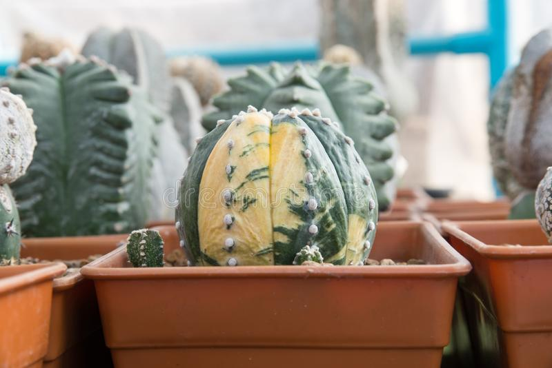 Plantes tropicales de cactus image libre de droits