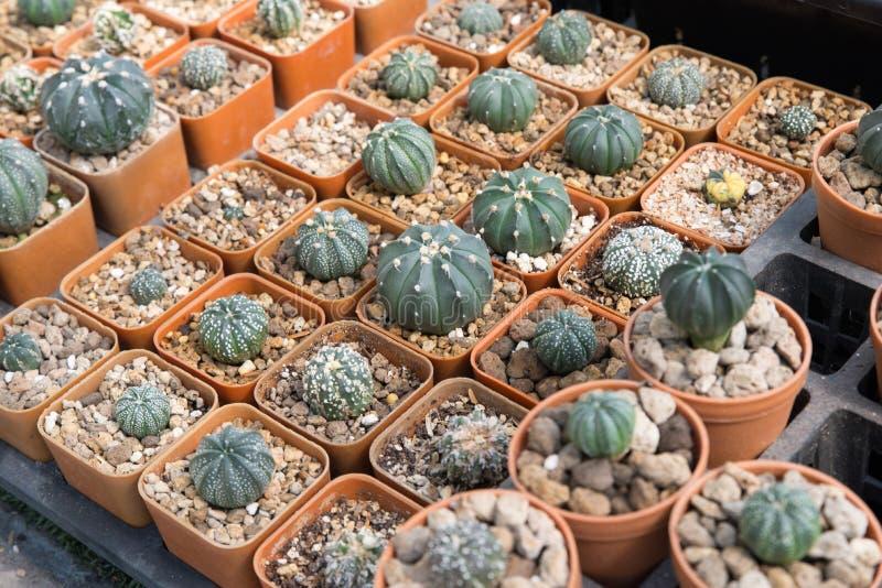 Plantes tropicales de cactus images stock