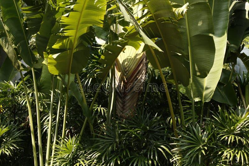 Plantes tropicales et feuilles images libres de droits