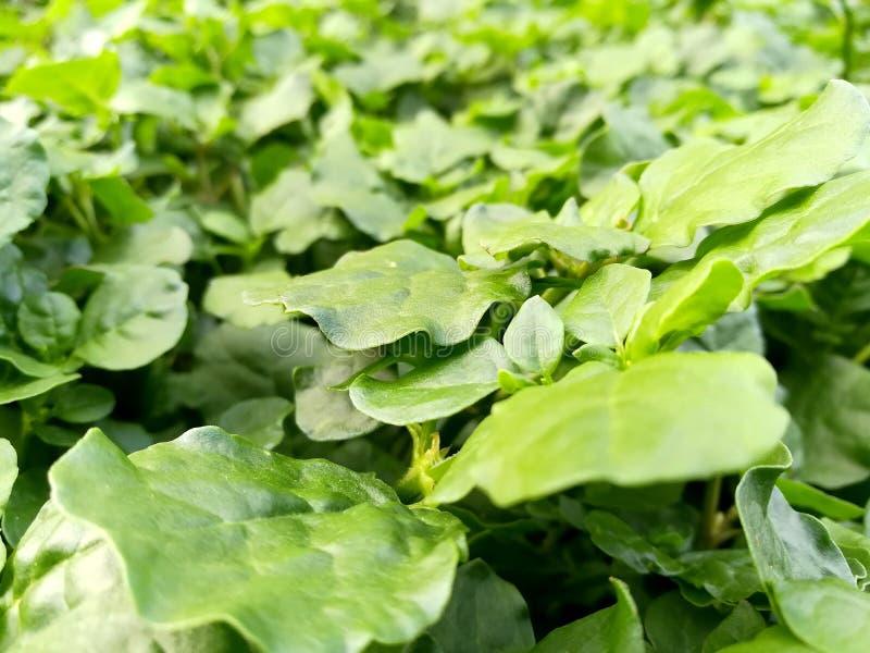 Plantes vertes photographie stock