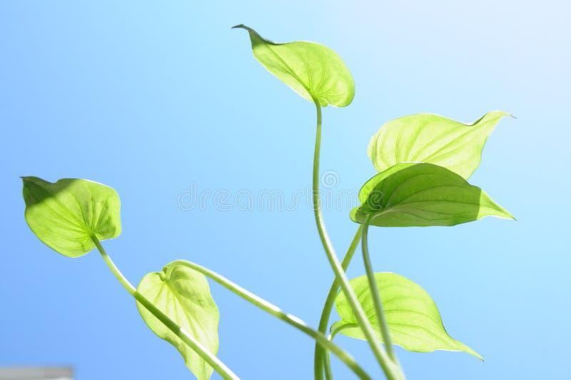 Plantes vertes lizenzfreie stockfotos