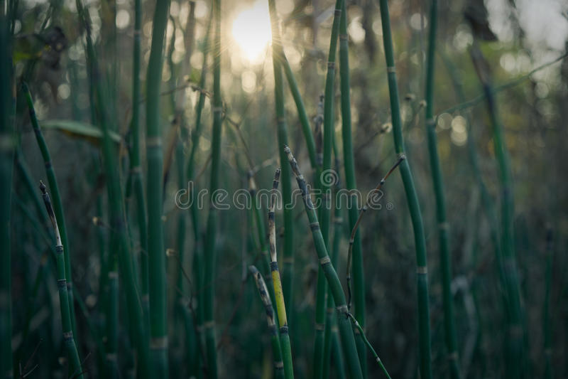Plantes vertes avec le rayon de soleil image libre de droits