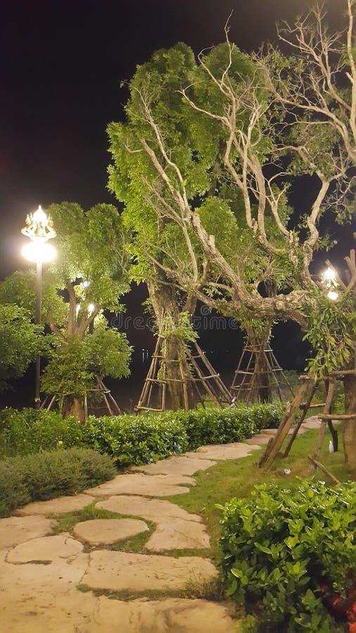 Plantes vertes d'arbres de jardin photos libres de droits