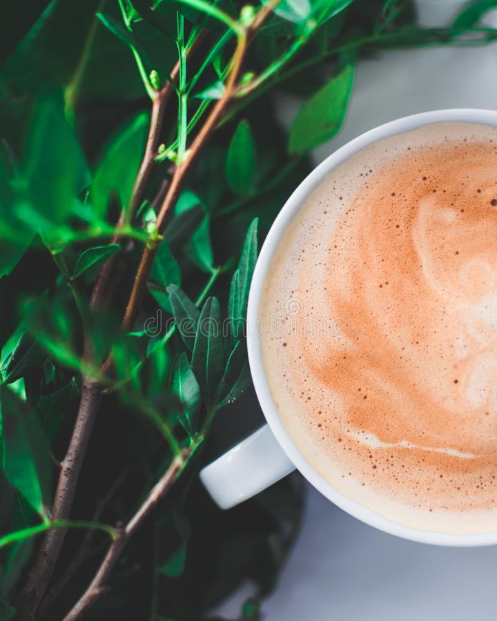 Plantes vertes de café et de nature image libre de droits