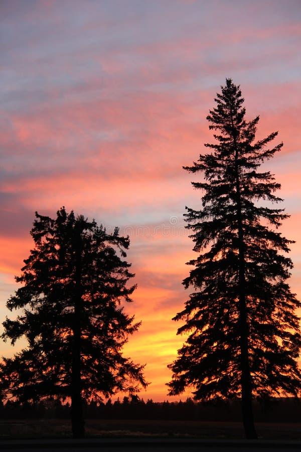 Plantes vertes de silhouette de coucher du soleil, Brandon, Manitoba images stock