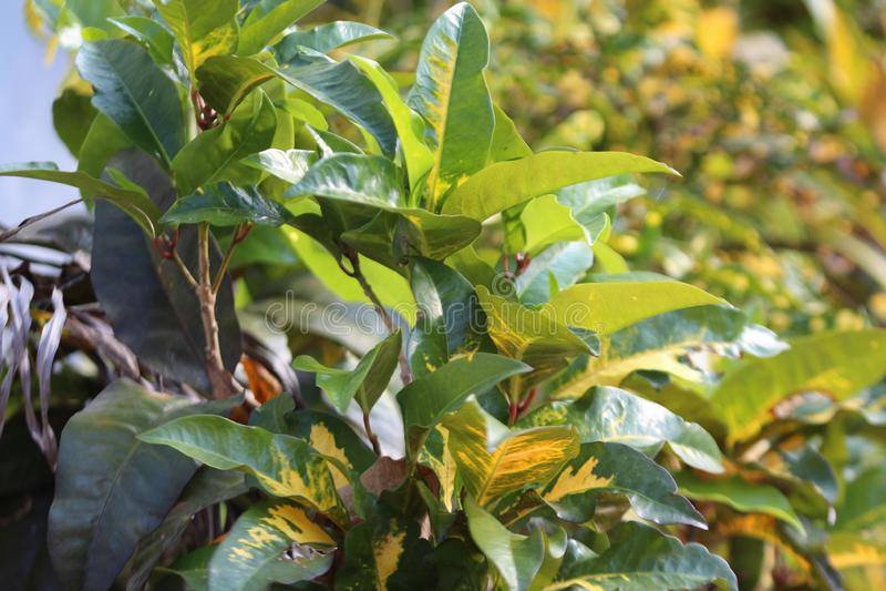 Plantes vertes exposées à la lumière du soleil photo libre de droits