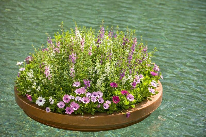 Planteur de flottement des fleurs photographie stock