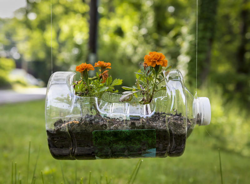 Planteur en plastique réutilisé avec des géraniums photo stock