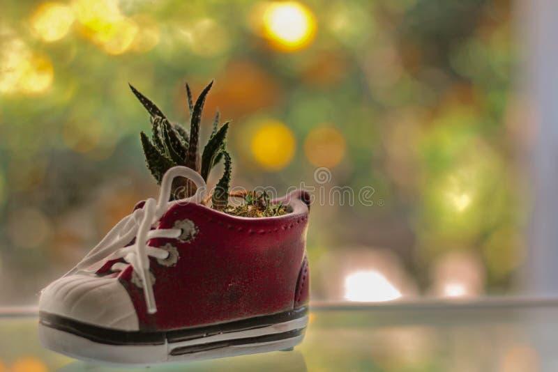 Planteur minuscule de chaussure images stock
