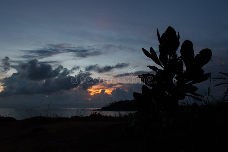 Plantez la silhouette du ` s au fond de ciel de coucher du soleil images libres de droits