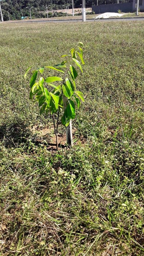Plantez un arbre, écrivez un livre, sauvez une vie photos stock