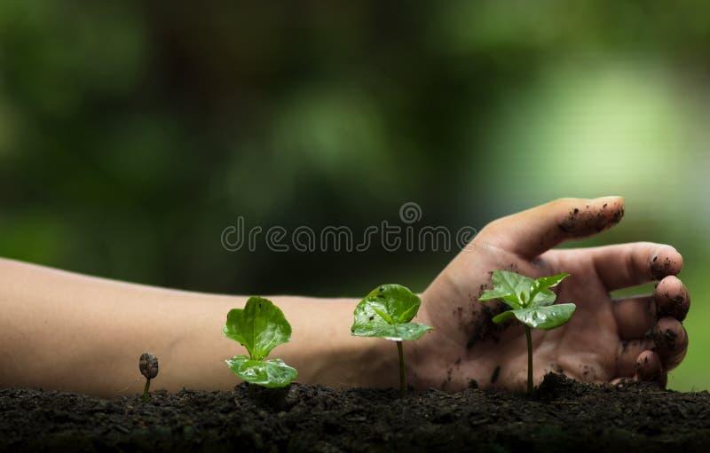 Plantez un arbre, protégez l'arbre, aide de main l'arbre, étape croissante, arrosant un arbre, arbre de soin, fond de nature images stock