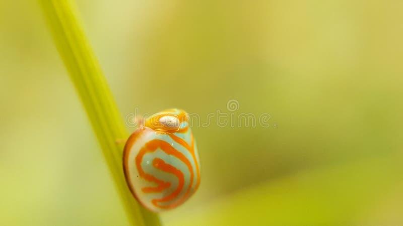Planthopper和昆虫从泰国 库存照片