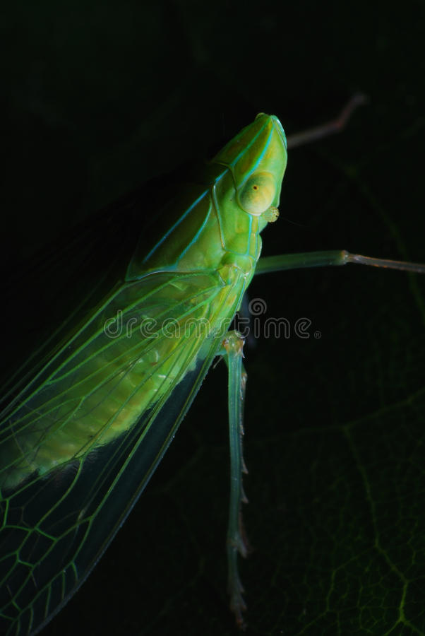 Download Planthopper In The Dark stock photo. Image of forest - 14634916