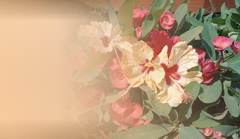 Plantilla abstracta para la página web, bandera, tarjeta de visita, invitación del fondo Diseño abstracto de la plantilla de los  ilustración del vector