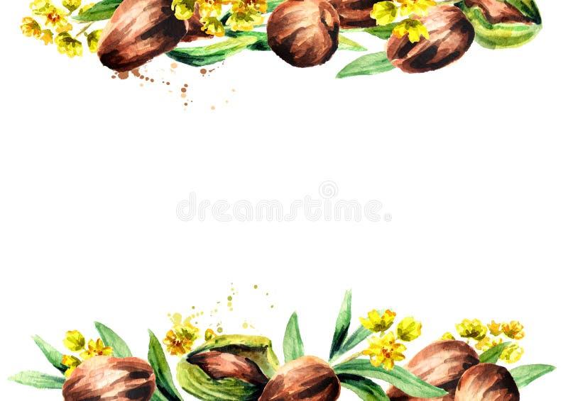 Plantilla de las nueces de la jojoba y de las hojas del verde ilustración del vector