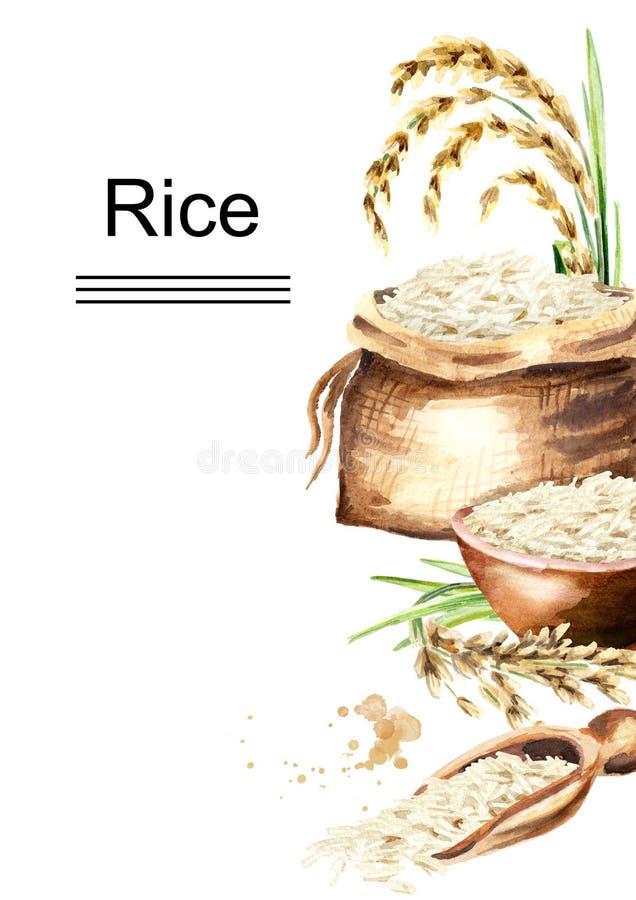 Plantilla del arroz blanco Ejemplo dibujado mano de la acuarela, aislado en el fondo blanco ilustración del vector