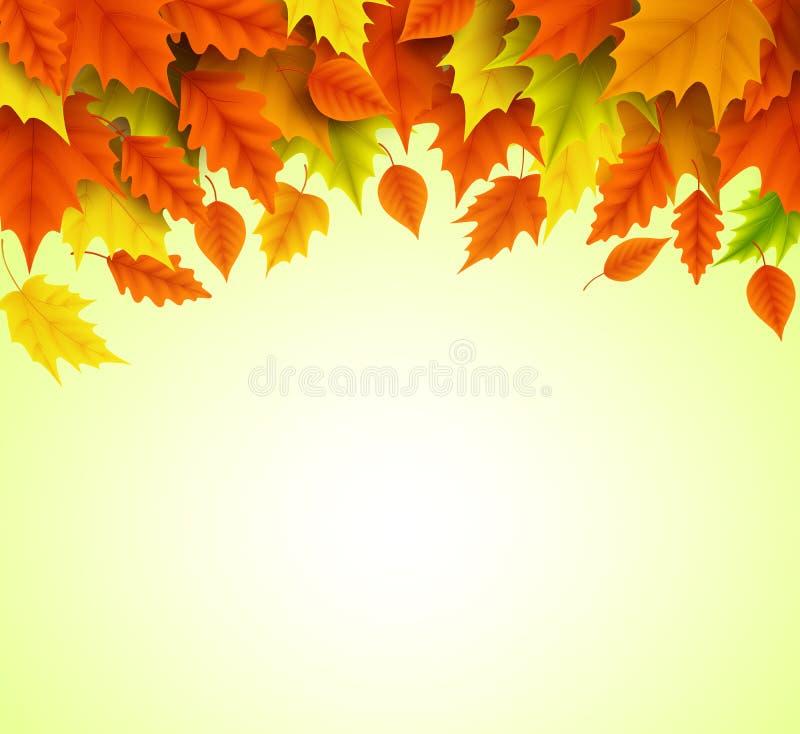 Plantilla del vector del fondo del otoño de caer anaranjada y amarilla de las hojas de arce ilustración del vector