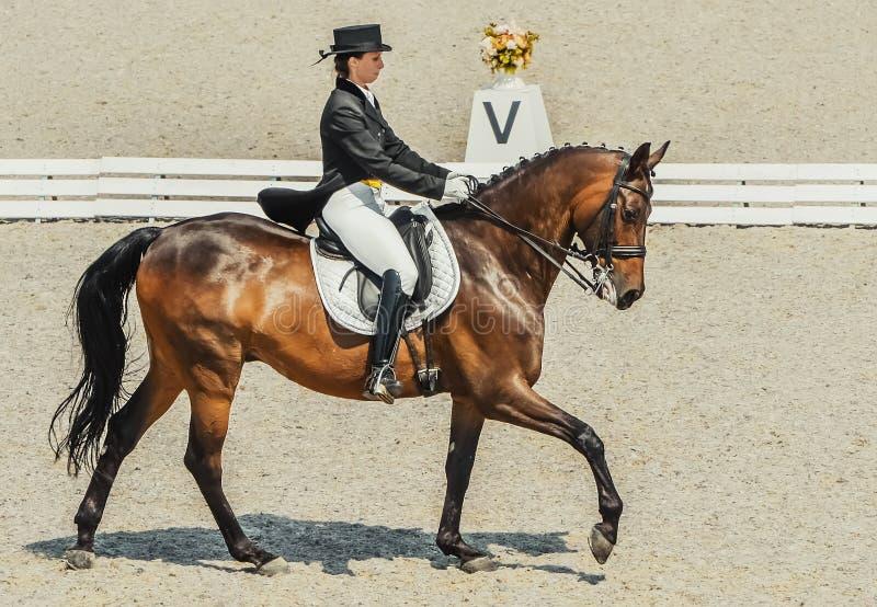 Plantilla gráfica del logotipo de la cabeza de caballo, ejemplo del vector en el fondo blanco fotografía de archivo
