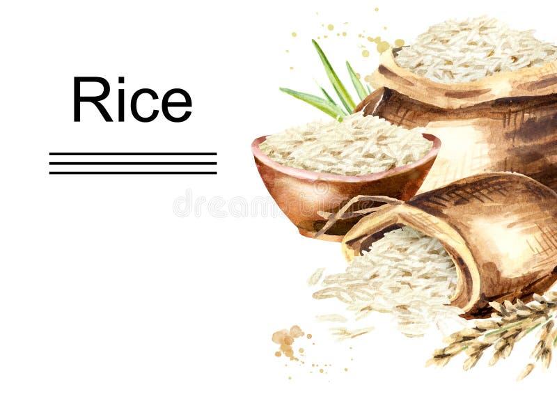 Plantilla horizontal del arroz blanco Ejemplo dibujado mano de la acuarela, aislado en el fondo blanco stock de ilustración