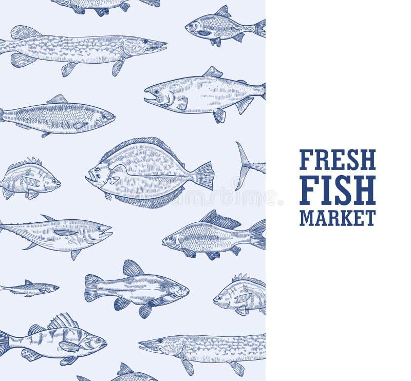 Plantilla monocromática de la bandera del cuadrado con los pescados que viven en la mano del mar, del océano o del río dibujada c ilustración del vector